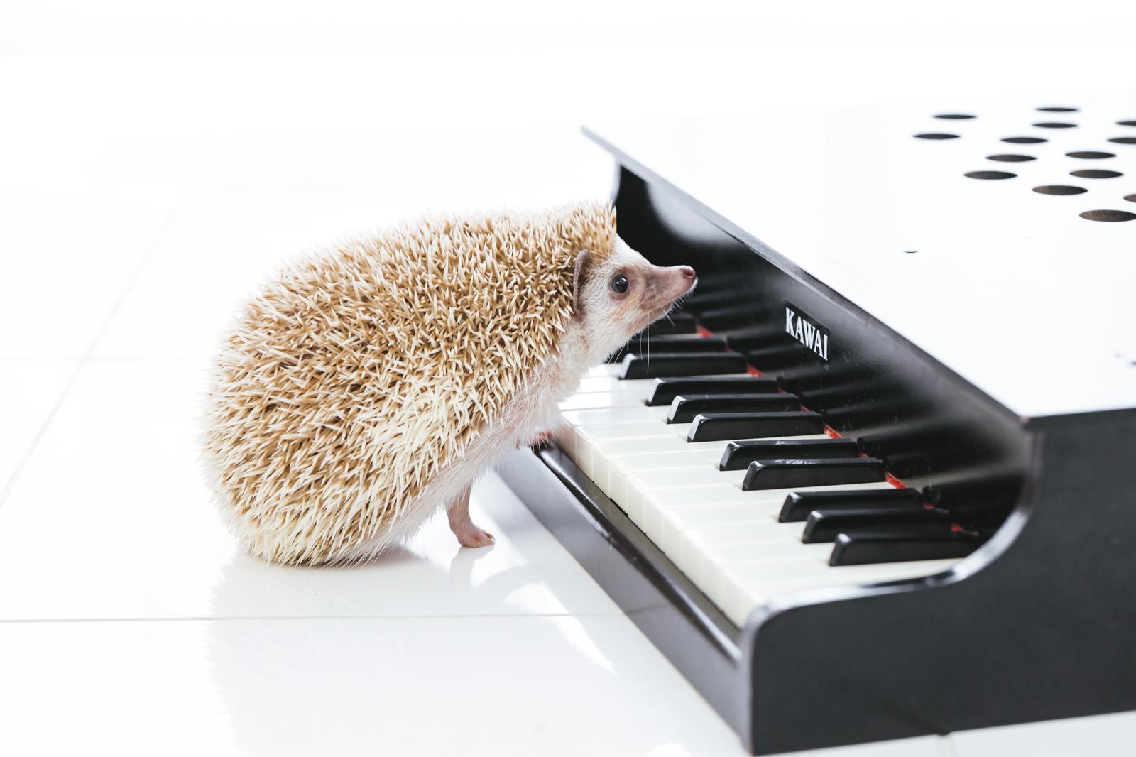 【カラオケ】音感の一番いい鍛え方はピアノをやることなの?